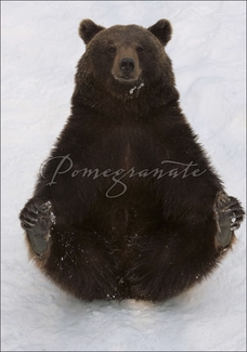 Eurasian Brown Bear with Cold Feet Christmas Cards