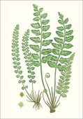 Fern Small Boxed Cards