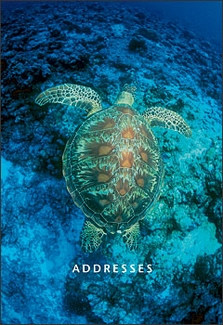 Green Sea Turtle Pocket Address Book