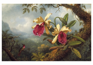 Hummingbirds: Martin Johnson Heade Notecard Folio