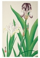 Iris Small Boxed Cards