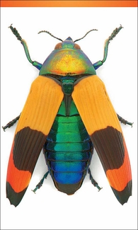 "Jewel Beetle 3 x 5"" Notepad"
