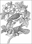John James Audubon Birds Coloring Book