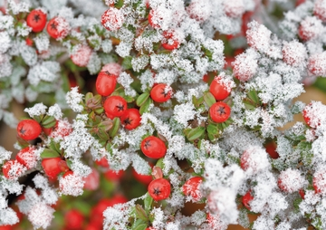 Nature's Details: Dennis Frates Holiday Card Assortment