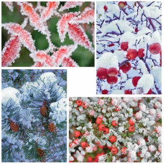 Nature�s Details: Dennis Frates Christmas Card Assortment