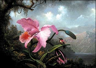 Orchid and Hummingbird Magnet