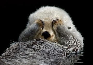 Otters Boxed Notecards