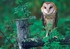 Owls: Photographs by Tim Fitzharris Boxed Notecards