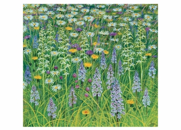 Pentwyn Meadow Orchids Birthday Card