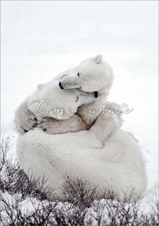 Polar Bear Embrace Christmas Cards