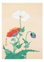 Poppies Small Boxed Cards