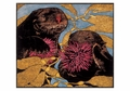 Sea Otters Small Boxed Cards
