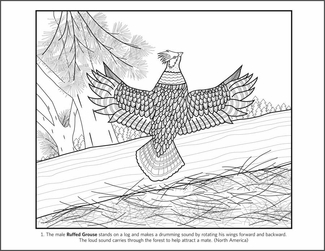 Susan Stockdale's Birds Coloring Book
