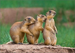Utah Prairie Dog Lookouts Notecard