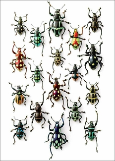 "Walking Weevils 5 x 7"" Notepad"