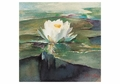 Water Lily in Sunlight Notecard