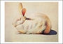 Wayne Thiebaud's Rabbit Small Boxed Cards