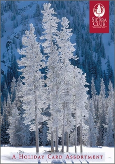 Winter Trees Christmas Card Assortment