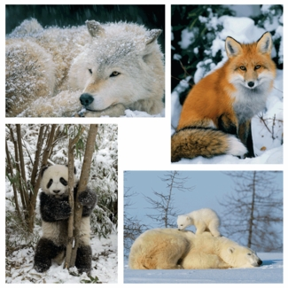 Winter Wildlife Holiday Card Assortment