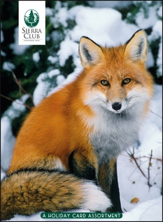 Winter Wildlife: Art Wolfe, Tom & Pat Leeson, Katherine Feng Christmas Card Assortment