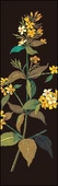 Yellow Loosestrife Bookmark