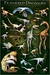 The Feathered Dinosaurs Poster