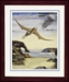 Pteranodon Flying Jurassic Reptile Dinosaur Framed Picture 17 x 14 inch