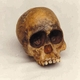 Taung Child Skull Replica