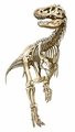 Jurassic World Giant T-rex Skeleton Dinosaur Cardboard Stand up