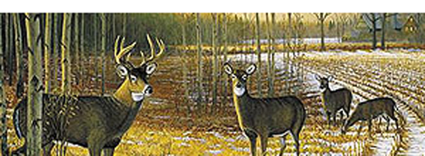 Deer - Whitetail Country Rear Window Decal