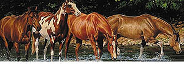 Horses - Reflections Rear Window Decal