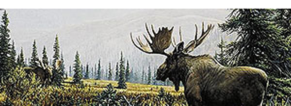 Moose Showdown Rear Window Decal