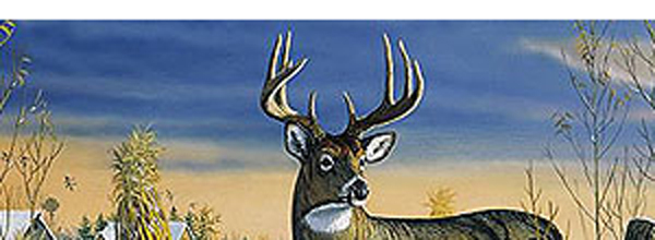 Whitetail Deer Rear Window Decal