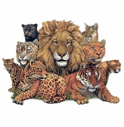 Great Cats Lion Tiger Cheetah Cougar Plus Size & Supersize T-Shirts S M L XL 2xl 3xl 4x 5x 6x 7x 8x (Lights Only)