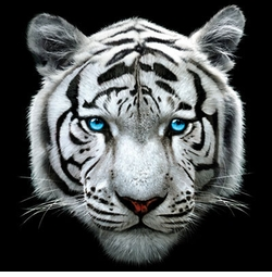 NEW! 3D White Tiger Face Plus Size & Supersize T-Shirts S M L XL 2x 3x 4x 5x 6x 7x 8x (All Colors)