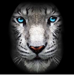 NEW! Big White Tiger Face Plus Size & Supersize T-Shirts S M L XL 2x 3x 4x 5x 6x 7x 8x (Darks Only)
