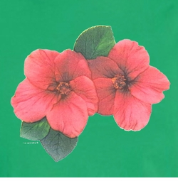 FINAL SALE! Mini Red Hibiscus on on Shamrock Green Round Neck Petite Plus Size T-Shirt 2x 3x