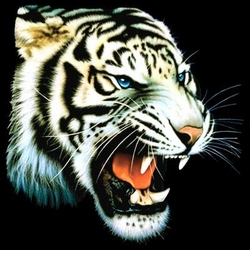 NEW! White Tiger Profile Plus Size & Supersize T-Shirts S M L XL 2x 3x 4x 5x 6x 7x 8x (All Colors)