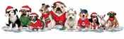 "SOLD OUT! FINAL SALE! Doggie ""Santa Paws"" Border Plus Size & Supersize Dog T-Shirts 4xl"