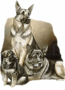 SALE! German Shepard Family  Plus Size & Supersize Dog T-Shirts S M L XL 2xl 3xl 4x 5x 6x 7x 8x (Lights Only)