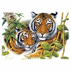 Two Tigers Plus Size & Supersize T-Shirts S M L XL 2xl 3xl 4x 5x 6x 7x 8x (Lights Only)