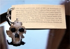 Australopithecus Skull  Replica - Sold Out!