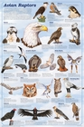 Avian Raptors Science Poster