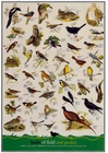 Birds of the Field and Garden Poster