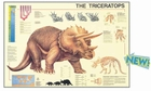 Dino Poster - Triceratops