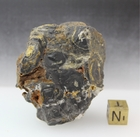 Fig Tree Chert Stromatolite For Sale- In Stock!