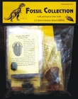 Fossil Collection - Large