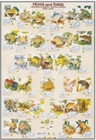 Frogs and Toads Poster - Biology Poster