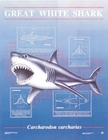 Great White Shark Poster GLOWS!