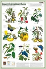 Insect Metamorphosis Science Poster